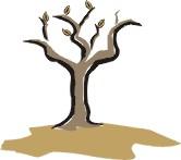 Testul arborelui - sau ce spune un arbore desenat despre dumneavoastră