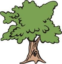 Testul arborelui - sau ce spune un arbore desenat despre dumneavoastră - un alt fel de arbore
