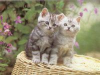 Semnul astrologic al animalului de casa - pisica